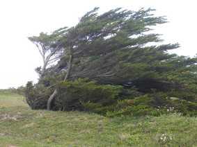 arbre_couche